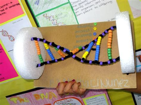 dna craft project 66 best images about science on dna school