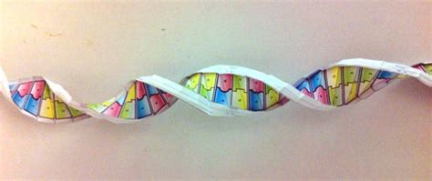 origami dna template origami dna make