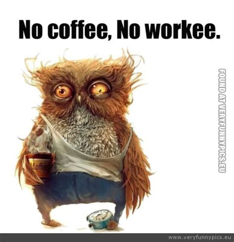 funny morning coffee quotes with animals quotesgram