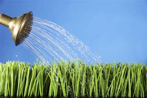 water for plants plants goldsealnews