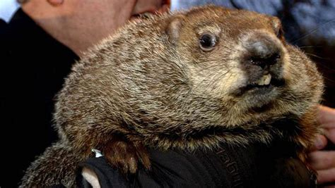 groundhog day duration groundhog day 2017 what time channel to