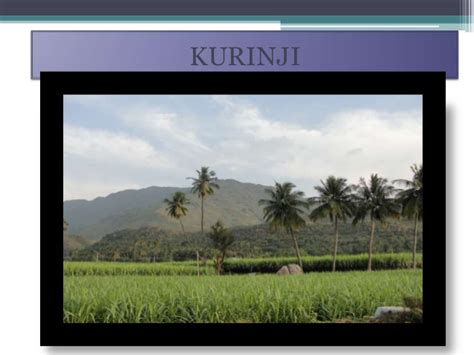 in with pictures five landscape of ancient tamilnadu kurinji mullai