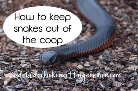 how to make a snake out of adelaide chicken sitting service