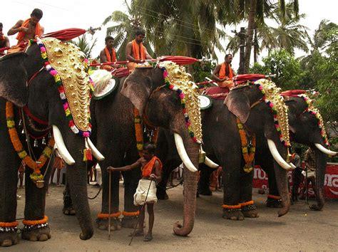 festival 2008 photo file elephants 2008 kerala festival jpg wikimedia commons