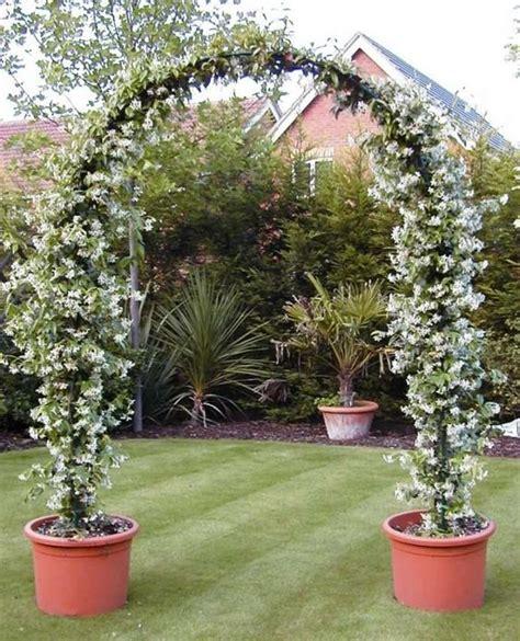 Garden Arch Vines Climber Vine Arch Home Garden