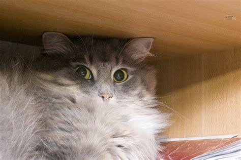 Random Cat Images
