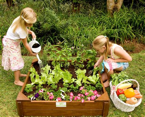 growing vegetable garden how to grow your own vegetables with room to grow