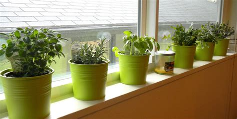 indoor vegetable gardens indoor vegetable gardening ideas 17 best ideas about