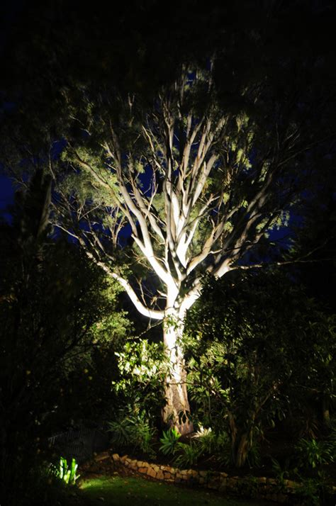 tree lights up lighting up gum trees with 27w led outdoor bring your