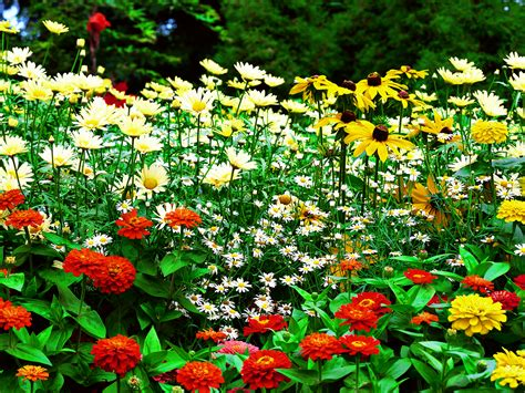 flowers gardens pictures flowers for flower flowers sceneries wallpapers