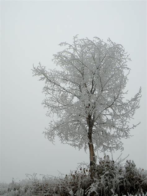 snow frosted tree snow winter fence tree frosted tree by