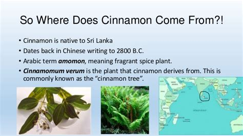 where do come from cinnamon