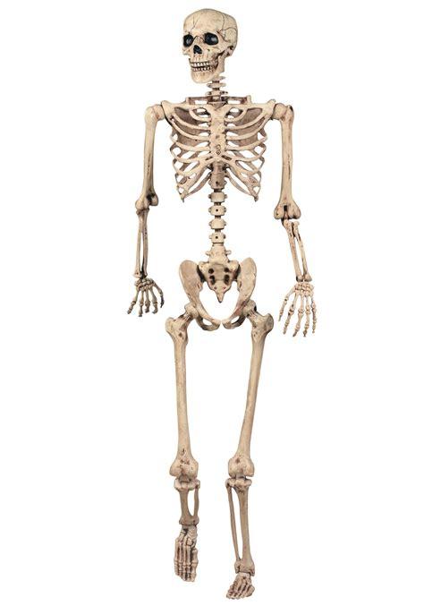 a skeleton lifesize posable skeleton skeleton decorations