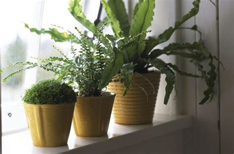 indoor plants no light understanding light for houseplants