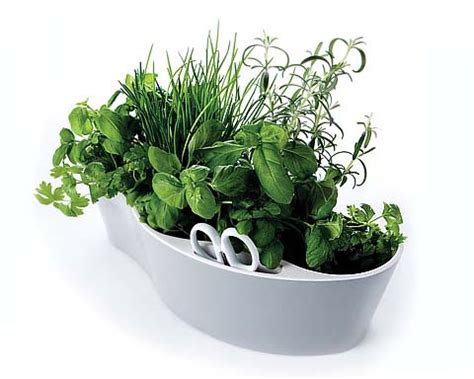 Thyme In Your Kitchen by How To Create A Herb Garden In Your Kitchen Cooking Tools