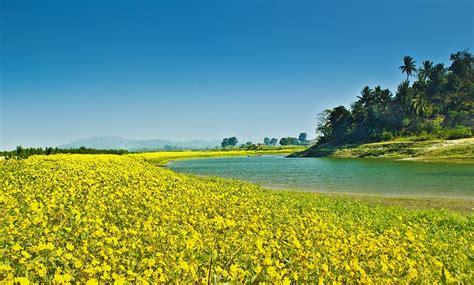 yellow garden flower beautiful yellow flower garden domain free photos