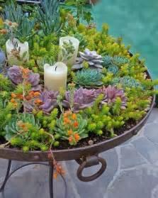 planters for succulents 25 best ideas about succulent planters on