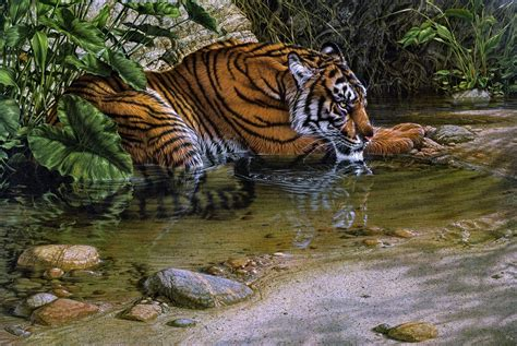 animal jungle jungle animals dvirfixler