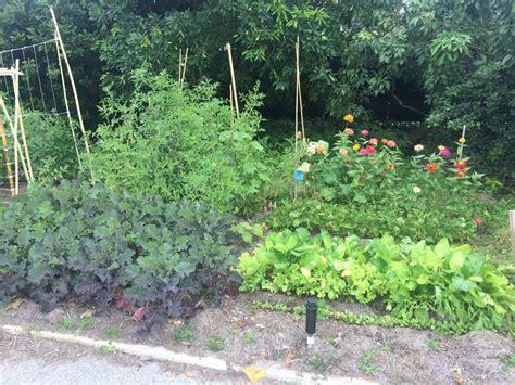 vegetable gardening in south florida florida vegetable gardening the florida vegetable garden