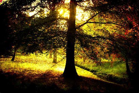 light the tree the tree of light by awjay on deviantart