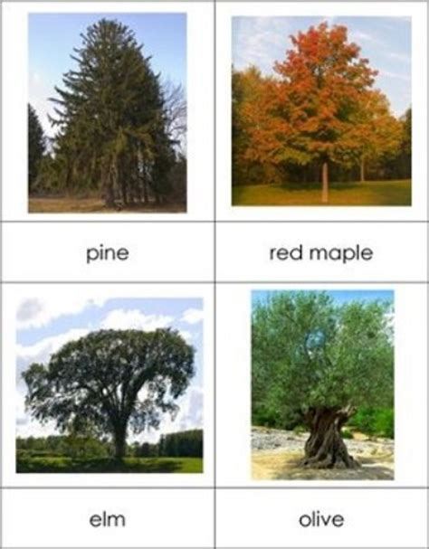 type of trees 10 interesting trees facts my interesting facts