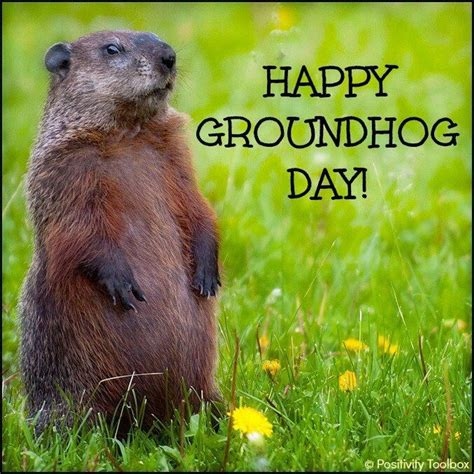 groundhog day day one lyrics feb 2 is groundhog day all things animal