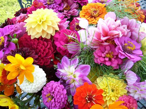 flowers gardens pictures mintbasil flower garden september 2012