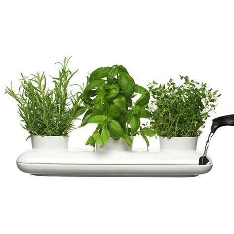 sagaform s trio herb pot contemporary way to grow fresh