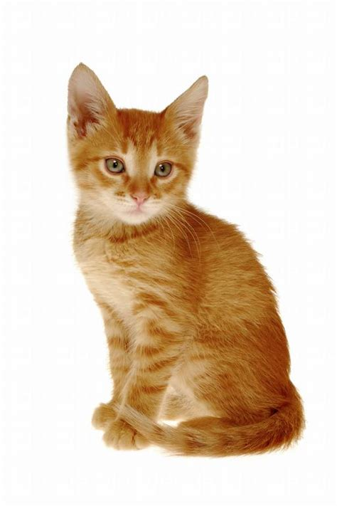 orange cat grouchy days grouch fable collection pt1