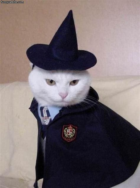 witches cat witch cat
