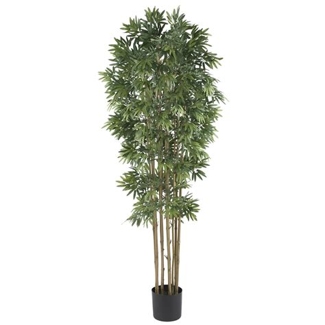 potted tree 6 foot bamboo japanica tree potted 5045 nearly
