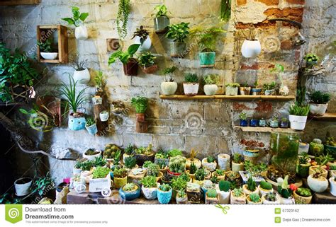 interior design with flowers flower shop stock photo image of sale plants interior