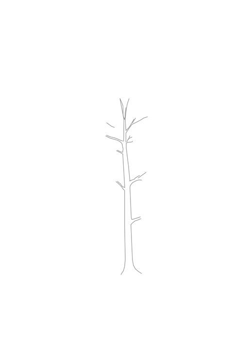 how to draw a realistic tree step by step branching out learn how to draw a realistic tree