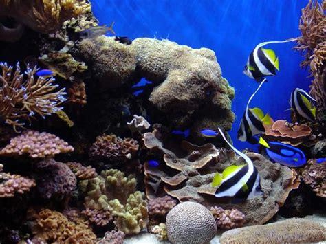 album photo aquarium dinosoria