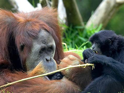 animal cam live cams san diego zoo animals plants