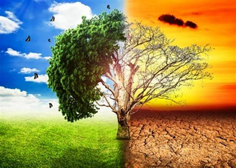 chagne trees climate change causes trees in eastern us to shift