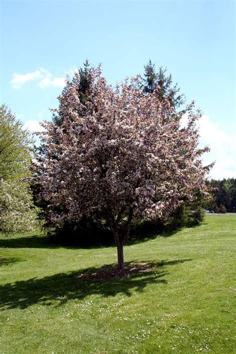 tree of tree jpg