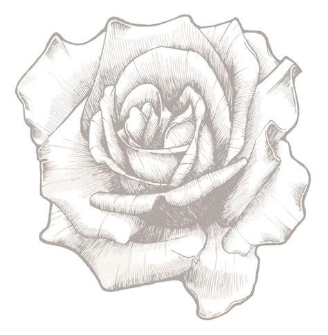 11支玫瑰花素描图片分享 11支玫瑰花素描图片下载