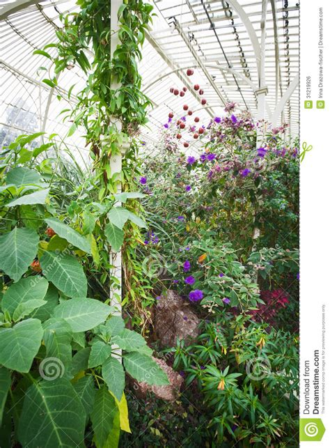 traditional plants greenhouse royalty free stock image image 31219926