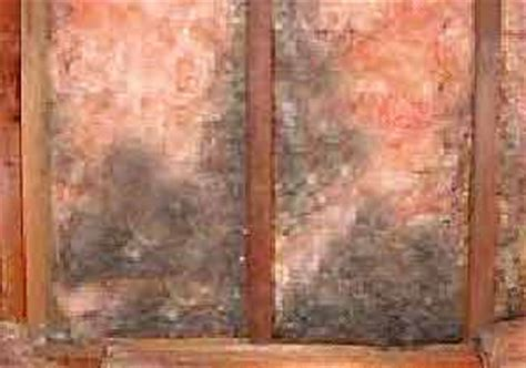 Mold On Ceiling Tiles by Mold Removal Structural Materials Black Mold Mildew Removal