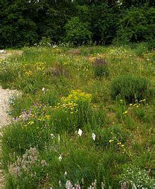 Botanischer Garten Der Universität Wien Wien österreich by Botanischer Garten Der Universit 228 T Wien