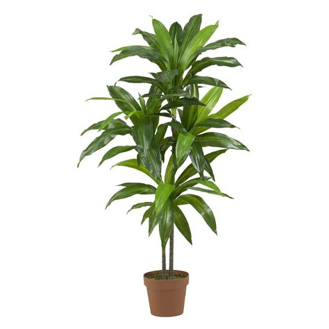 potted tree 48 inch dracaena tree potted 6585