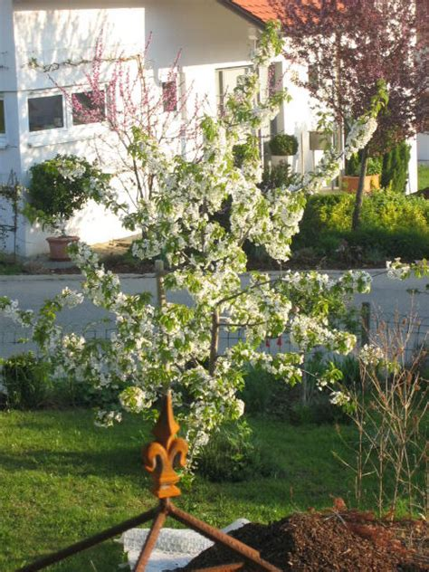 Garten Gestalten Obstbäume by Obstbaum Kleiner Garten Haus Planen