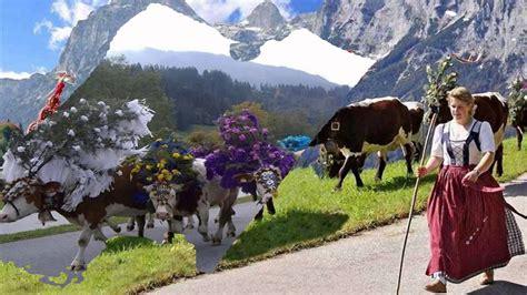festival austria the tirol cow festival austria hd1080p