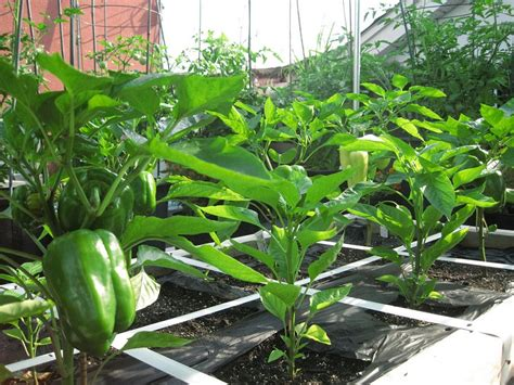 how to make a small vegetable garden how to make terrace vegetable garden complete tutorial