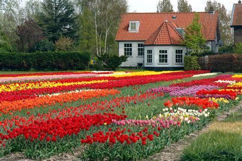 flowers for home garden garden flower with house fresh flowers