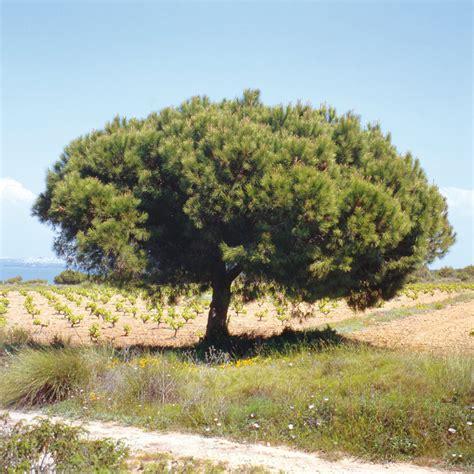 Der Garten Duden by Duden Baum Rechtschreibung Bedeutung Definition