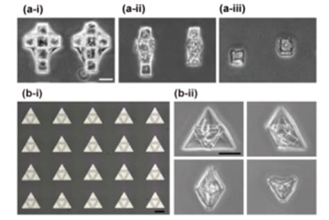 origami b cells origami tissue engineering openwetware