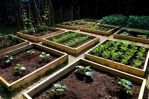 what to plant in raised vegetable garden progress in the raised bed vegetable garden the modern