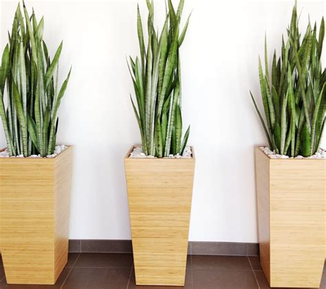 modern home decor pictures modern indoor plant pots fresh point to the home decor